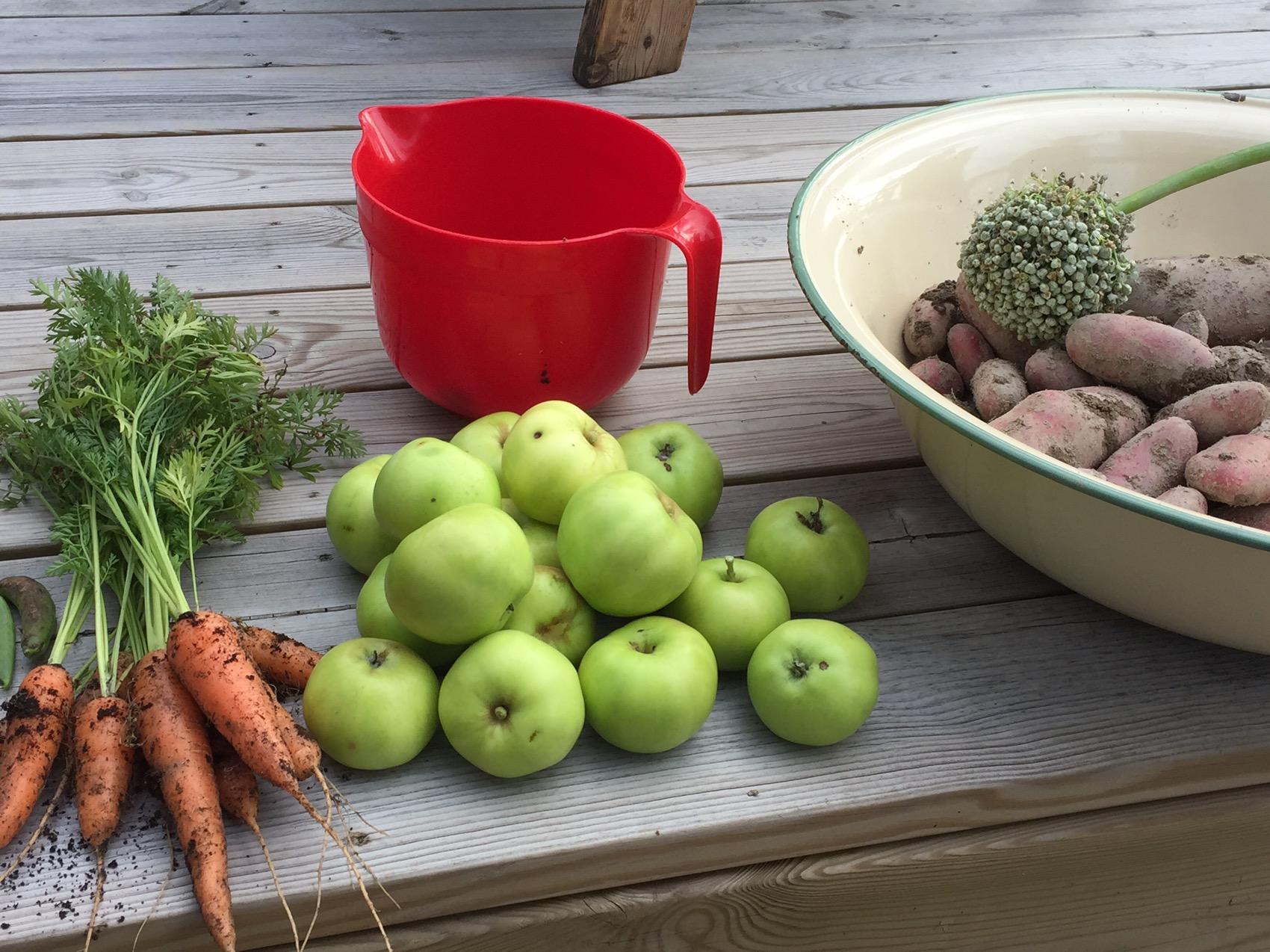 plantera syren beskära